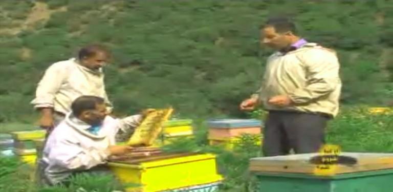 تولید عسل از کجا شروع کنم شبکه یک
